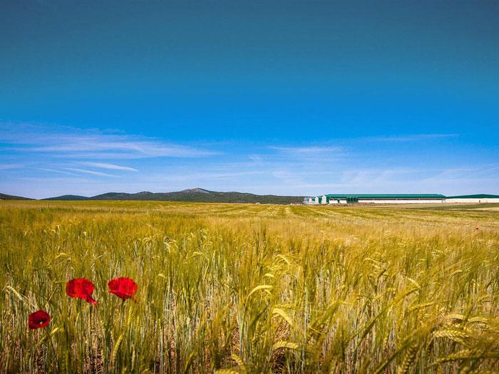 Proyectos de Gestión Medioambiental en Zaragoza (Aragón) y Lleida
