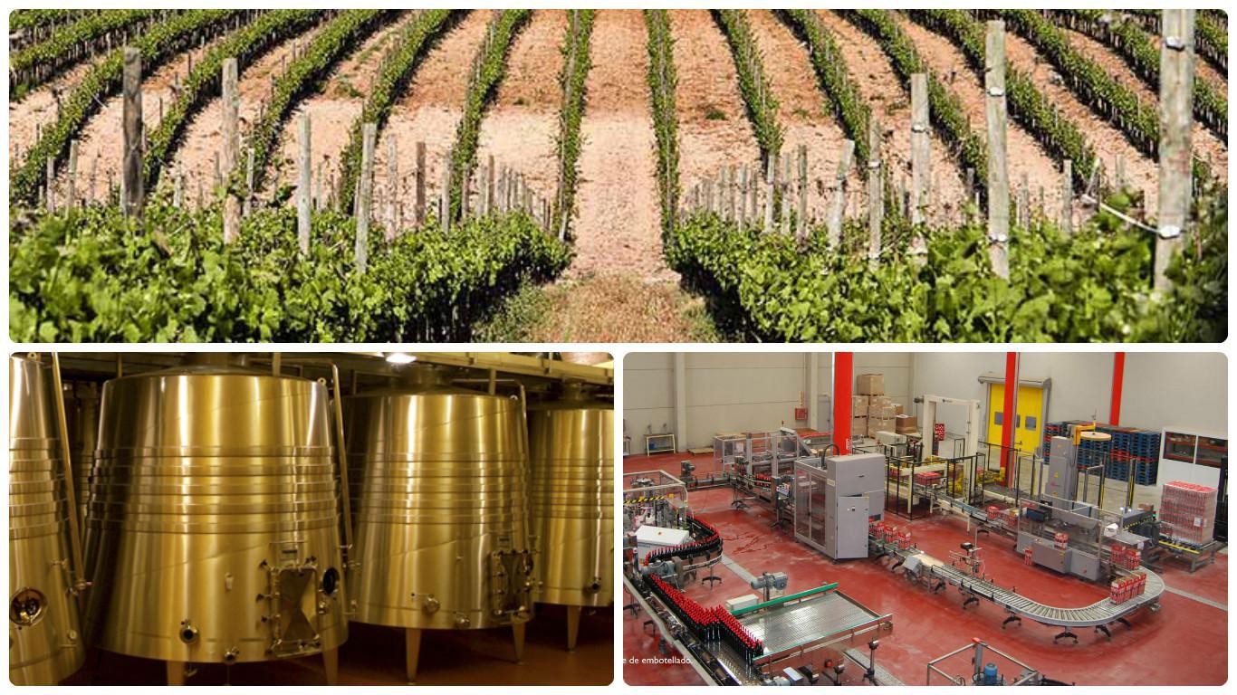 Gestión OCM del Vino en Zaragoza (Aragón) y Lleida