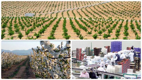 Gestión organización productores frutas y hortalizas en Zaragoza y Lleida