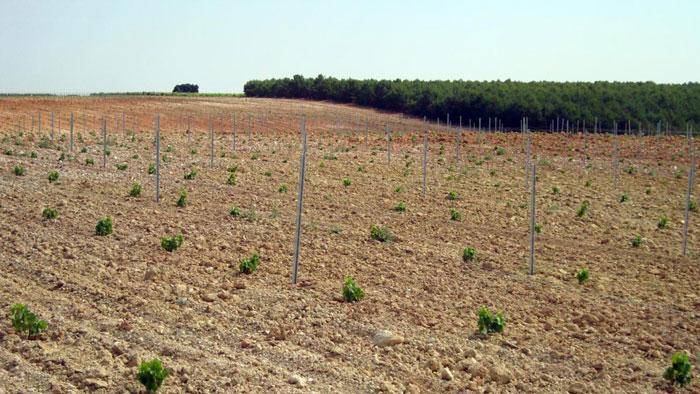Tasaciones agrarias en Zaragoza