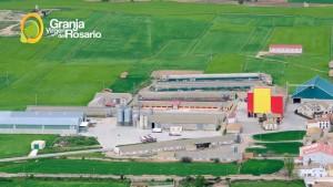 Ingenieria Zaragoza Huevos campero