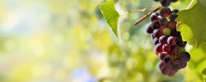 subvencion promocion vino