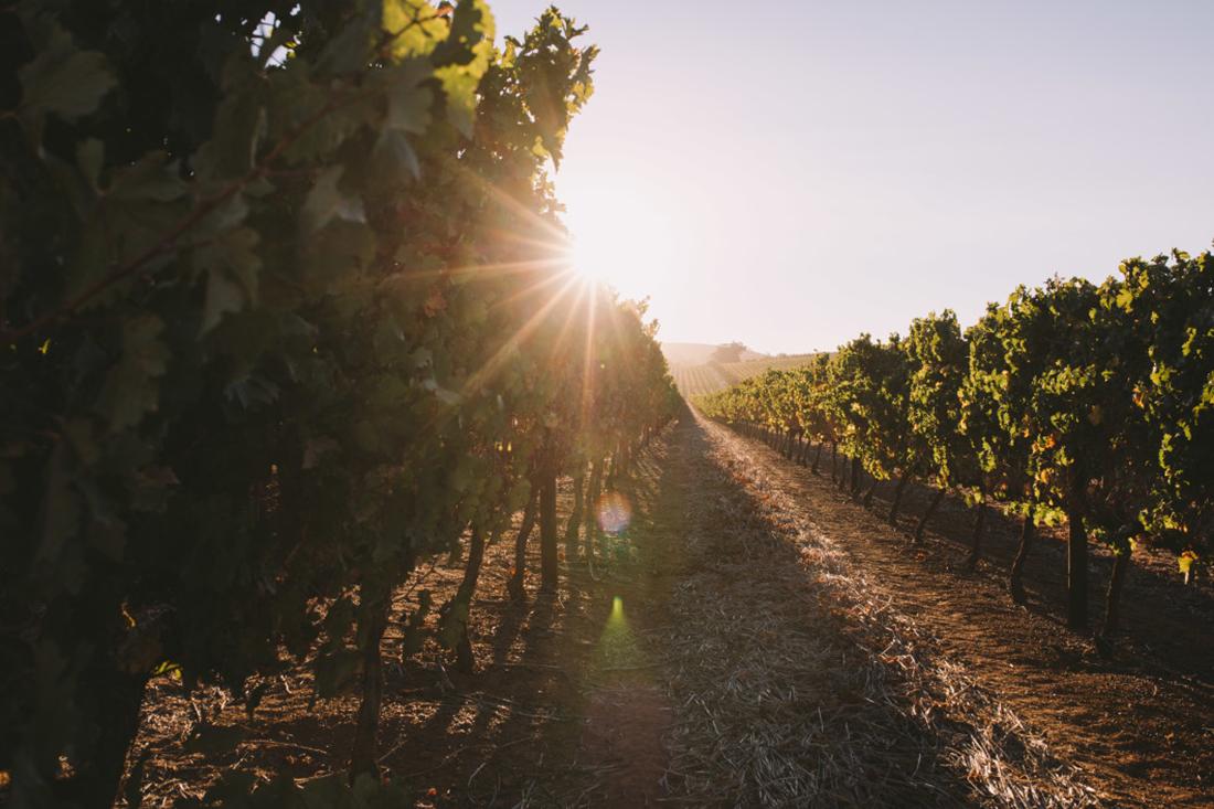 inversion vino